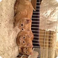 Adopt A Pet :: Three Amigos - Xenia, OH