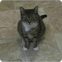 Adopt A Pet :: Sassy - Catasauqua, PA