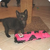 Adopt A Pet :: BITSY - Hamilton, NJ