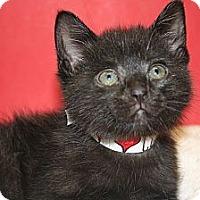 Adopt A Pet :: SHAMUS - SILVER SPRING, MD