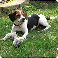 Adopt A Pet :: Manson - Waukesha, WI