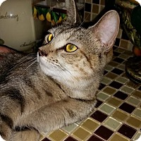 Adopt A Pet :: Georgia - Harrisburg, NC