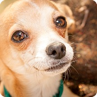 Adopt A Pet :: Mr. Wiggles - Surprise, AZ