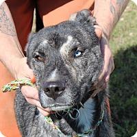 Adopt A Pet :: Mary J - Harmony, Glocester, RI