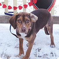 Adopt A Pet :: Abbigale - West Chicago, IL