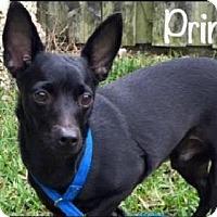 Adopt A Pet :: Prince aka Lil' Dude - Homestead, FL