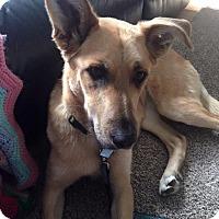 Adopt A Pet :: Tisha - Pitt Meadows, BC