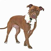 Adopt A Pet :: ANA - Orlando, FL