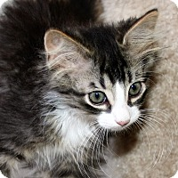 Adopt A Pet :: James - Santa Rosa, CA