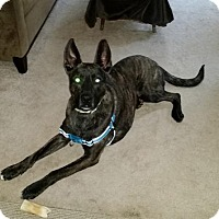 Adopt A Pet :: Shadow (FOSTER) - Lawrenceville, NJ