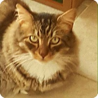 Adopt A Pet :: LewLew - Laguna Woods, CA