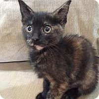 Adopt A Pet :: Scrubby - Woodland, CA