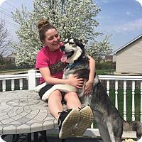 Adopt A Pet :: Mel - Crystal Lake, IL