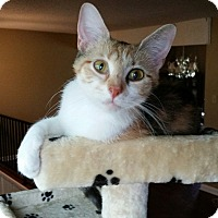 Adopt A Pet :: Mimi - Bartlett, TN