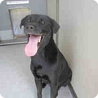 Adopt A Pet :: Brody - Newnan City, GA