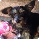 Adopt A Pet :: Little Bit