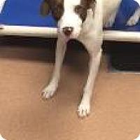 Adopt A Pet :: Flannery 4921 - Columbus, GA