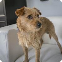 Adopt A Pet :: Vega - Inglewood, CA