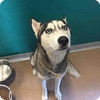 Adopt A Pet :: FROSTIE - Texas City, TX