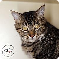Adopt A Pet :: Peaches - Lyons, NY