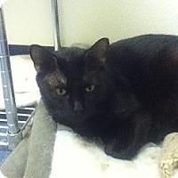 Adopt A Pet :: Tramp - Colorado Springs, CO