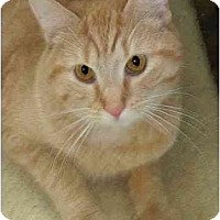 Adopt A Pet :: Garfield - Plainville, MA