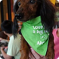 Adopt A Pet :: Crimson - Baton Rouge, LA
