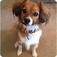 Adopt A Pet :: Sneeker - Lake Forest, CA