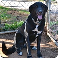 Adopt A Pet :: Bailey - Athens, GA