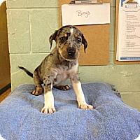 Adopt A Pet :: Bingo - River Falls, WI