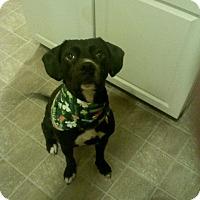 Adopt A Pet :: Jasper - Sterling, MA