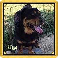 Adopt A Pet :: Max (POM-CD) - Brattleboro, VT