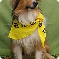 Adopt A Pet :: Jennings - Mission, KS