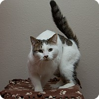 Adopt A Pet :: Jack - Anchorage, AK