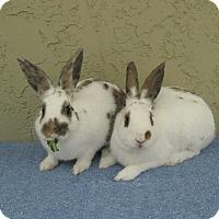 Adopt A Pet :: Eddy & Elly - Bonita, CA