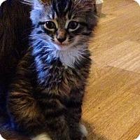 Adopt A Pet :: Pico - Monroe, GA