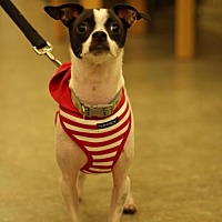 Adopt A Pet :: Milo - West Palm Beach, FL