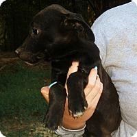 Adopt A Pet :: Ben - Pewaukee, WI