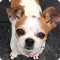 Adopt A Pet :: Beatrix - San Marcos, CA