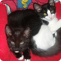 Adopt A Pet :: LaChoy $35.00 - Buford, GA
