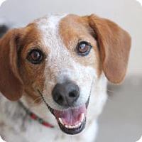 Adopt A Pet :: COOKIE - Kyle, TX