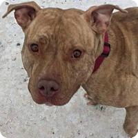 Adopt A Pet :: Steffi - Cleveland, OH