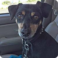 Adopt A Pet :: Trident - Oakley, CA