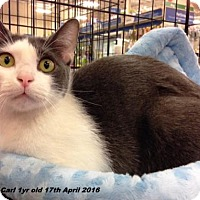 Adopt A Pet :: Carl - Irving, TX