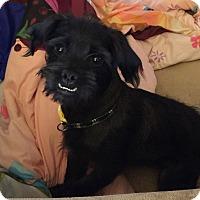 Adopt A Pet :: Rigby - Phoenix, AZ