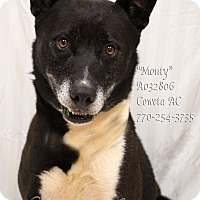 Adopt A Pet :: Monty - Newnan City, GA