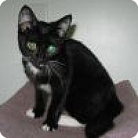 Adopt A Pet :: Sanibel - Powell, OH