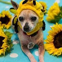 Adopt A Pet :: Tink - Scottsdale, AZ