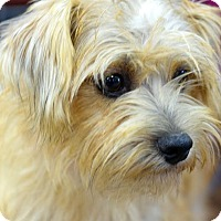 Adopt A Pet :: Teddy - Memphis, TN