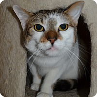 Adopt A Pet :: Smores & Harley - Michigan City, IN